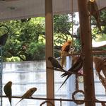 京さまと渋谷原宿で女性に人気の最新グルメ食べつくす