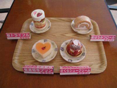 今が見頃! ピンクのじゅうたん富士山芝桜ツアー