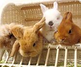 「甘口リポート辛口リポート」新宿エリアで話題の癒し系動物カフェ編