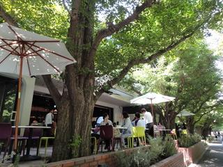 青山の新名所!自然と一体化したニューレストラン